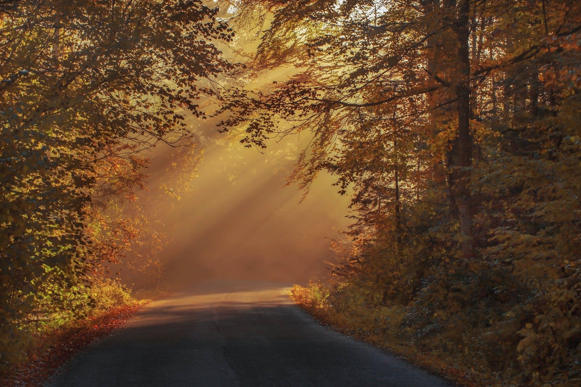 gray asphalt road in between brown orange leaf trees during daytime